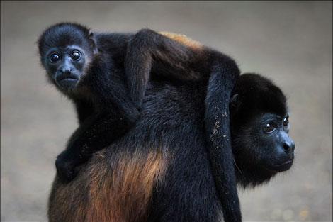 deforestation-animals
